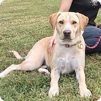 Adopt A Pet :: Saks - Virginia Beach, VA