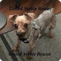 Adopt A Pet :: Tuffy - The Village, FL