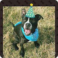 Adopt A Pet :: Rocco - Piqua, OH