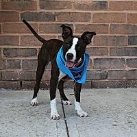 Adopt A Pet :: Princess - Jerseyville, IL