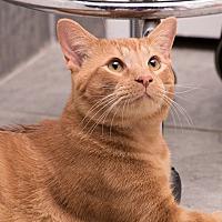 Adopt A Pet :: Woodson - Durham, NC