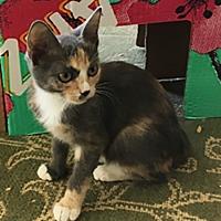 Adopt A Pet :: Tabitha - Metairie, LA