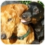 Photo 2 - Dachshund Dog for adoption in Spokane, Washington - Sonny