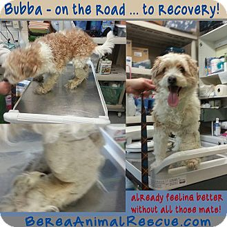 Terrier (Unknown Type, Small) Mix Dog for adoption in Berea, Ohio - Bubba