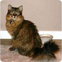 Adopt A Pet :: Fluffy - Portland, OR