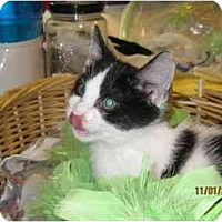 Adopt A Pet :: Pebbles - Catasauqua, PA