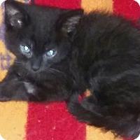 Adopt A Pet :: Posie - Loveland, CO