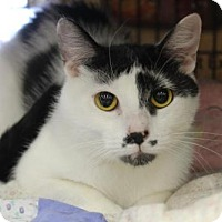 Adopt A Pet :: Lomasi - Hamilton, ON