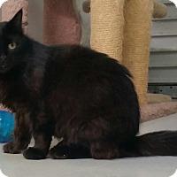 Adopt A Pet :: Letta - Diamond Springs, CA