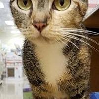 Adopt A Pet :: Penny - Tampa, FL