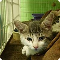 Adopt A Pet :: Hubert - Bloomingdale, NJ