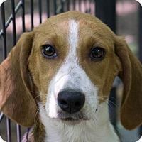 Adopt A Pet :: Sandy - Reidsville, NC
