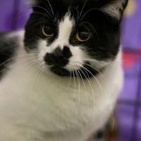 Adopt A Pet :: Mystique - Spruce Grove, AB