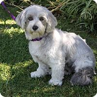Adopt A Pet :: MANDY - Newport Beach, CA