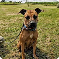 Adopt A Pet :: Ethel - Lisbon, OH