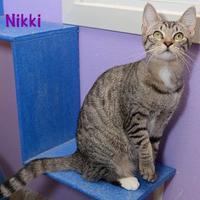 Adopt A Pet :: Nikki - Baton Rouge, LA