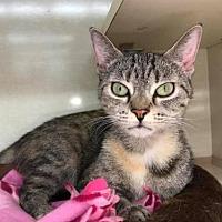 Adopt A Pet :: Fifi - Balto, MD