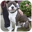 Photo 2 - American Pit Bull Terrier Mix Dog for adoption in Berkeley, California - Buffy
