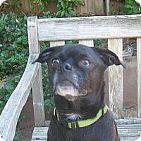 Adopt A Pet :: Pogo the 3-Legged Chug - Concord, CA