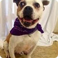 Adopt A Pet :: Chelsea - justin, TX
