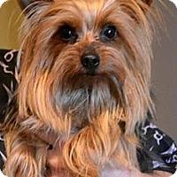 Adopt A Pet :: Fiona - Greensboro, NC