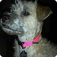 Adopt A Pet :: Mia - Hagerstown, MD