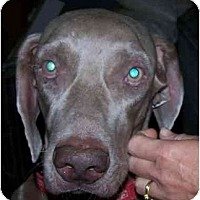 Adopt A Pet :: Zeppy  **ADOPTED** - Eustis, FL