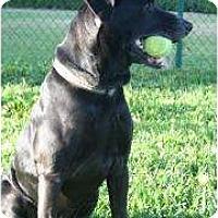 Adopt A Pet :: Coal - Altmonte Springs, FL