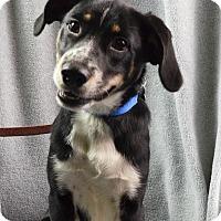 Adopt A Pet :: Dempsey - Minneapolis, MN