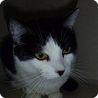 Adopt A Pet :: Sis - Hamburg, NY