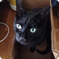 Adopt A Pet :: Charlo - Somerville, MA
