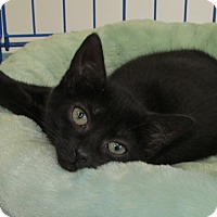 Adopt A Pet :: Desiree - Richmond, VA