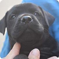 Adopt A Pet :: Tilly - Dana Point, CA