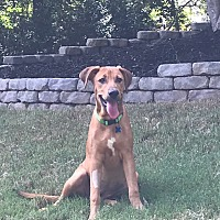 Adopt A Pet :: Dakotah - Alpharetta, GA