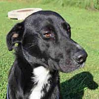 Adopt A Pet :: Simon - Newnan City, GA