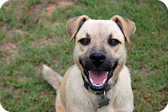 Shepherd (Unknown Type)/Boxer Mix Dog for adoption in Austin, Texas - Favor