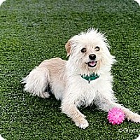 Adopt A Pet :: Colby - Mission Viejo, CA