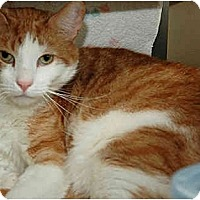 Adopt A Pet :: White Face - Warminster, PA