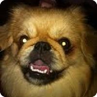 Adopt A Pet :: Crosby - Richmond, VA