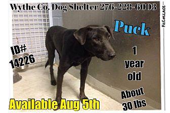 Labrador Retriever Mix Dog for adoption in Wytheville, Virginia - Puck