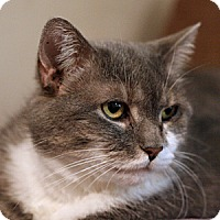 Adopt A Pet :: Daisy - Columbia, MD