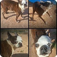 Adopt A Pet :: Reggie - Alamogordo, NM
