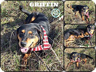 Rottweiler/Hound (Unknown Type) Mix Puppy for adoption in Kimberton, Pennsylvania - Griffin