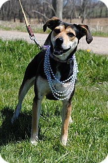 Terrier (Unknown Type, Medium) Mix Dog for adoption in East Sparta, Ohio - Patty