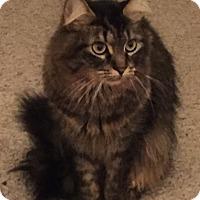 Adopt A Pet :: Rosie-Adoption Pending - Arlington, VA