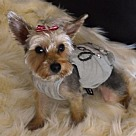 Adopt A Pet :: Mookie