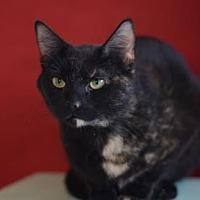 Adopt A Pet :: Zelda - Dahlonega, GA