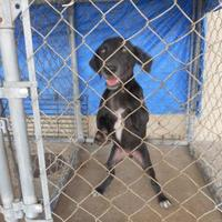 Terrier (Unknown Type, Small) Mix Dog for adoption in Opelousas, Louisiana - osa