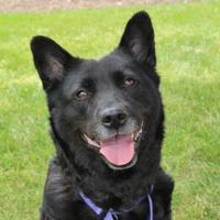 Adopt A Pet :: Trixie - Mentor, OH