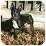 Photo 1 - Boston Terrier Dog for adoption in Muldrow, Oklahoma - Bruno